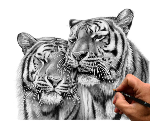 A Stunning Wildlife Drawings by an British Artist