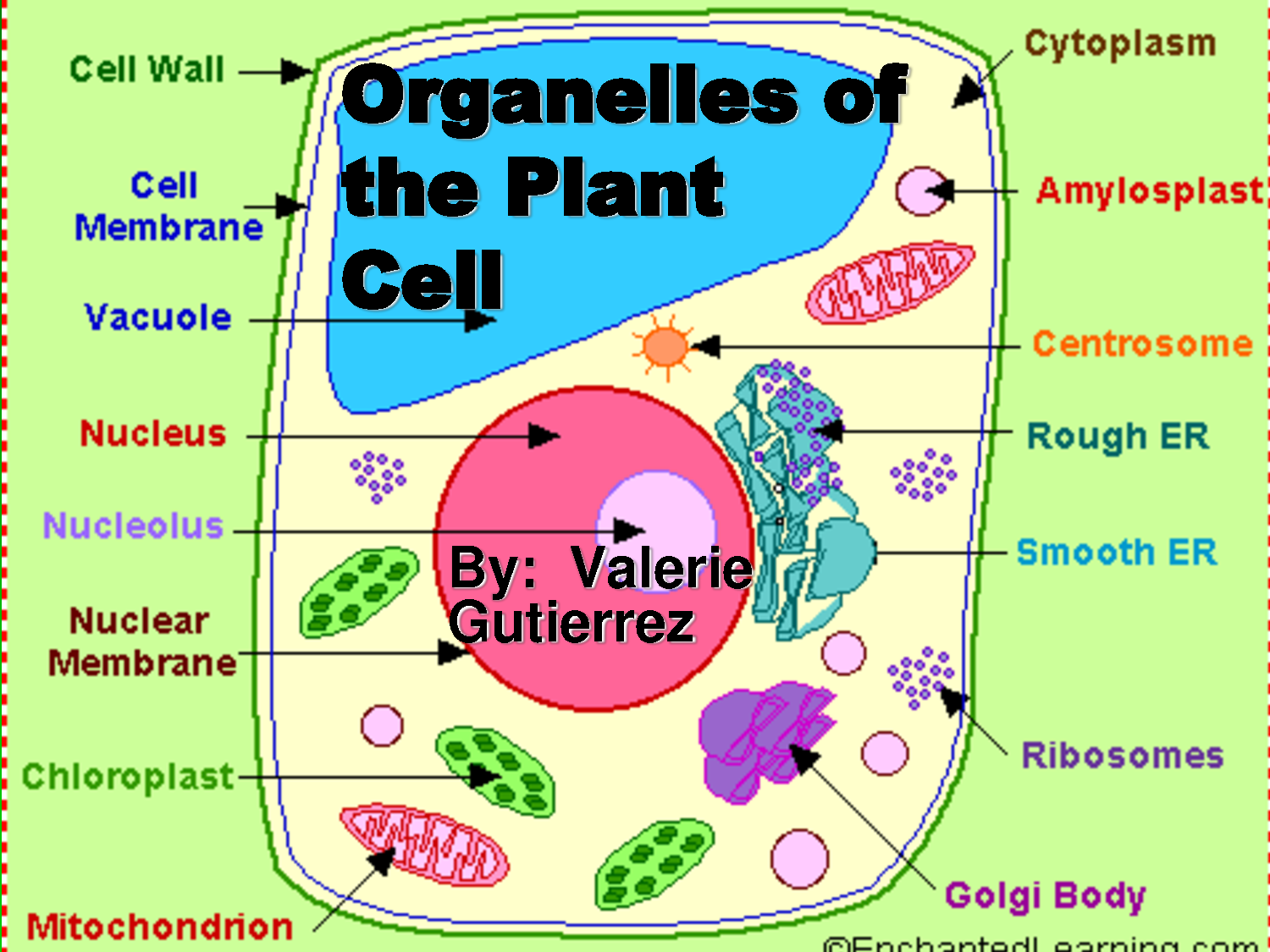 plant cell diagram with functions simplex addressable fire alarm system wiring lifescience
