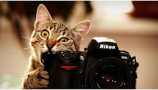 Fotografi dan Bisnis