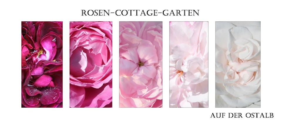 Rosen-Cottage-Garten