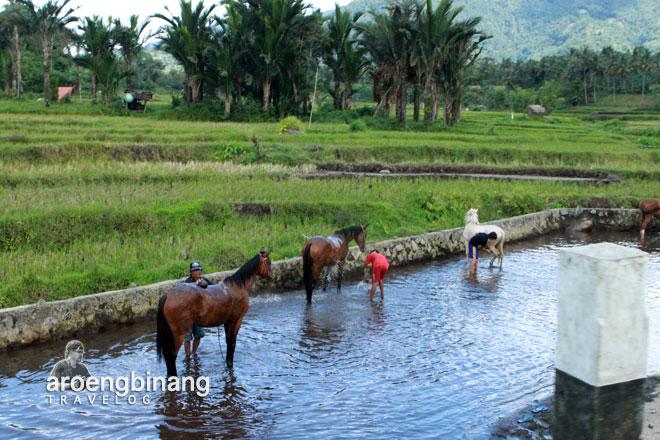 kuda suasana pedesaan watu pinawetengan minahasa sulawesi utara