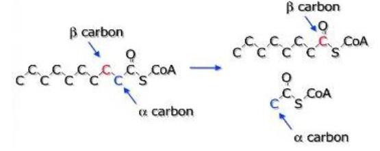 Oksidasi karbon β menjadi keton