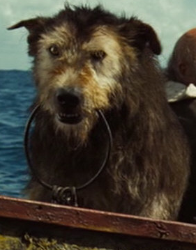 pirates of the caribbean dog