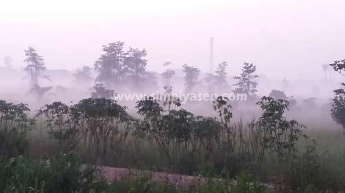 Kabut dibelakang rumah..  Lokasi Duta Bandara Pontianak.  Samsung Galaxy Grand Prime. Tanggal 14 Juli 2015.  Foto Asep Haryono