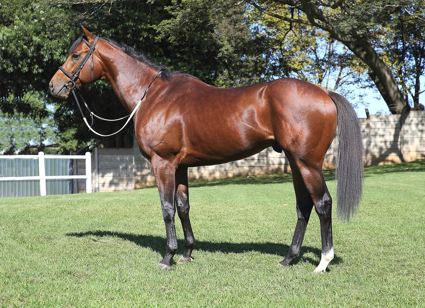 Gold Standard - trained by Glen Kotzen - Vodacom Durban July 2018 - Horse - Horse Racing