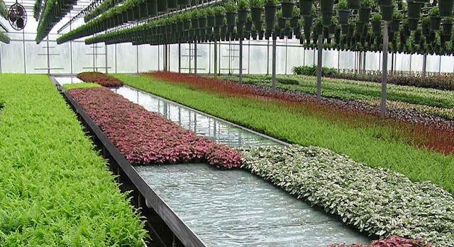 Big Business Using Commercial Greenhouses