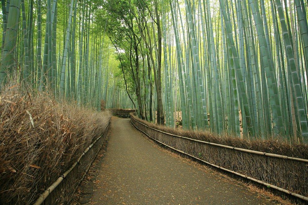 Популярная бамбуковая роща в Японии (8 фото)