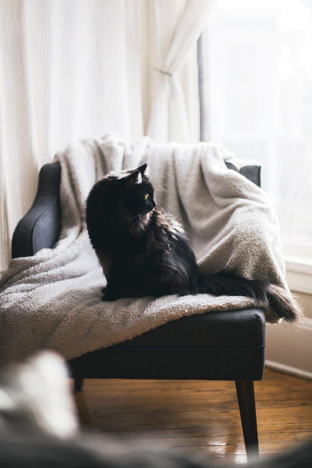 kari-shea cold blanket winter cozy hygge cat skincare dryness cold