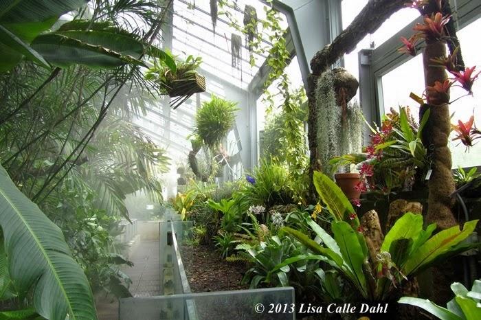 Descubriendo hojas: Orquídeas en el invernadero del Jardín Botánico ...