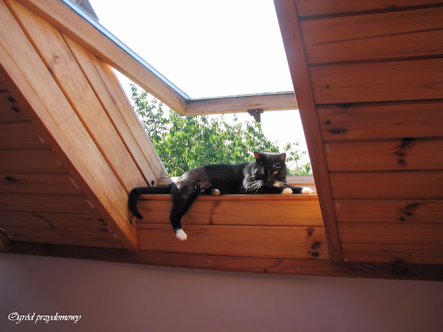 dzień kota, ogród przydomowy