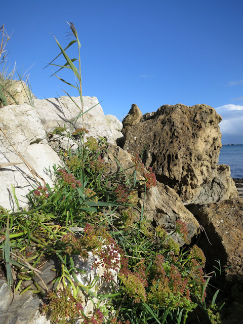 Rocks with plants growing on them, reed in front of blue sky, sea behind