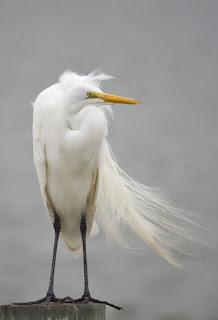 حل كلمة السر هى من الطيور مكونة من 10 حروف