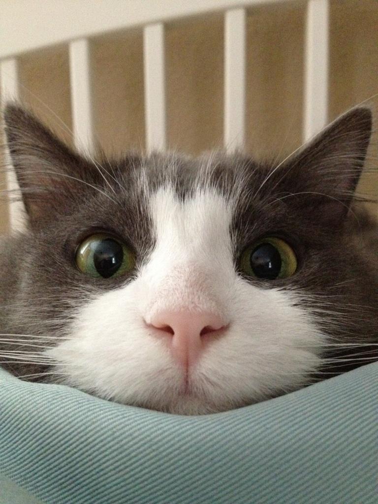 Funny Cats Part 7 60 Pics Amazing Creatures