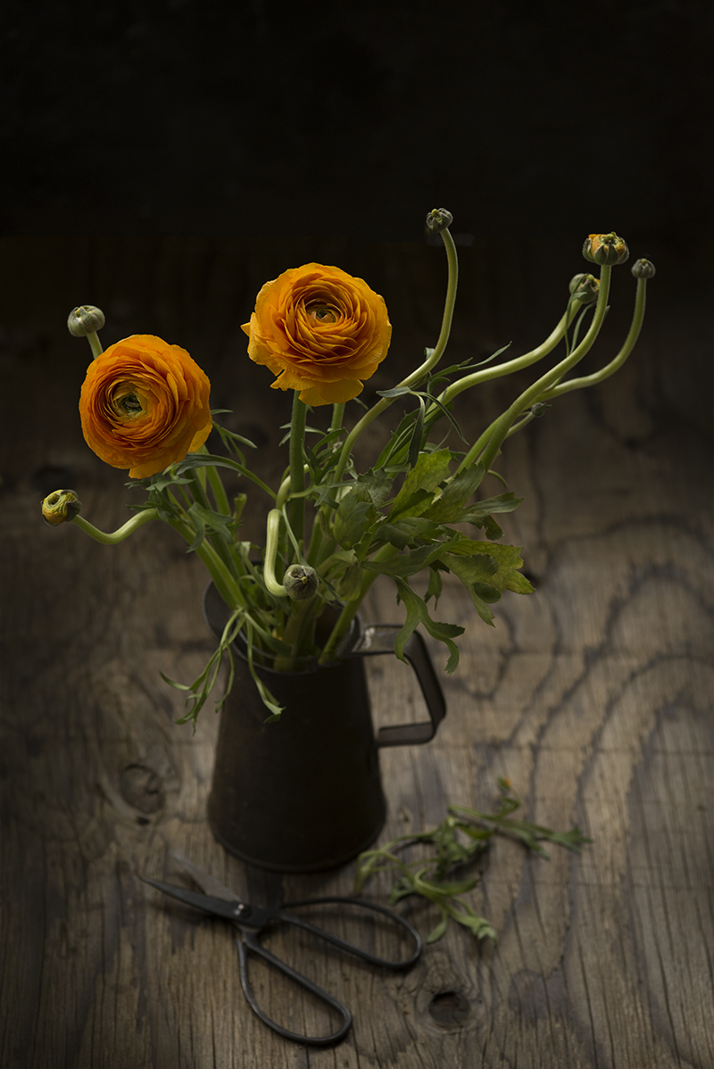 Sunday Stills - Ranunculus