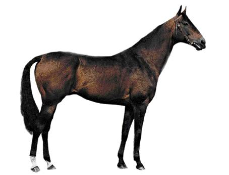Exemple croupe horizontale chez le cheval.