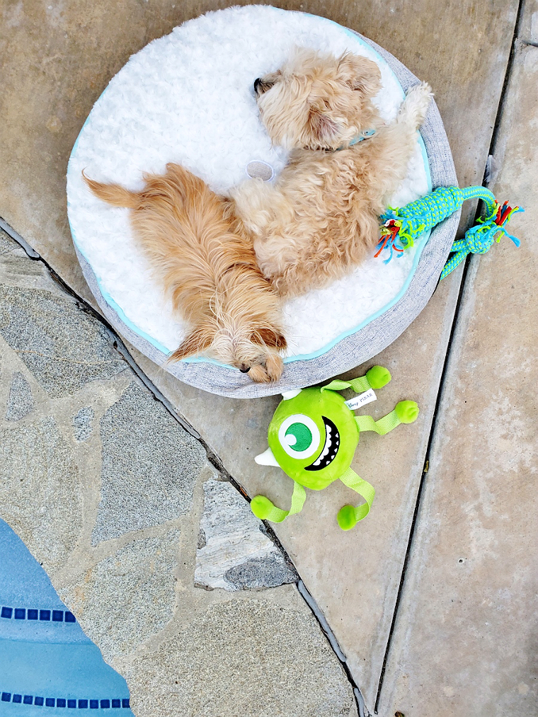 Affordable Pet Beds at 99 Cents Only Stores- #DoThe99 #99Obsessed #AD