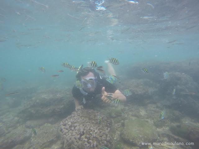 Saya Snorkeling di Pantai Nglambor 7