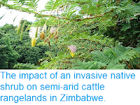 https://sciencythoughts.blogspot.com/2014/11/the-impact-of-invasive-native-shrub-on.html