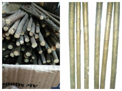 Bambu jepang untuk konins