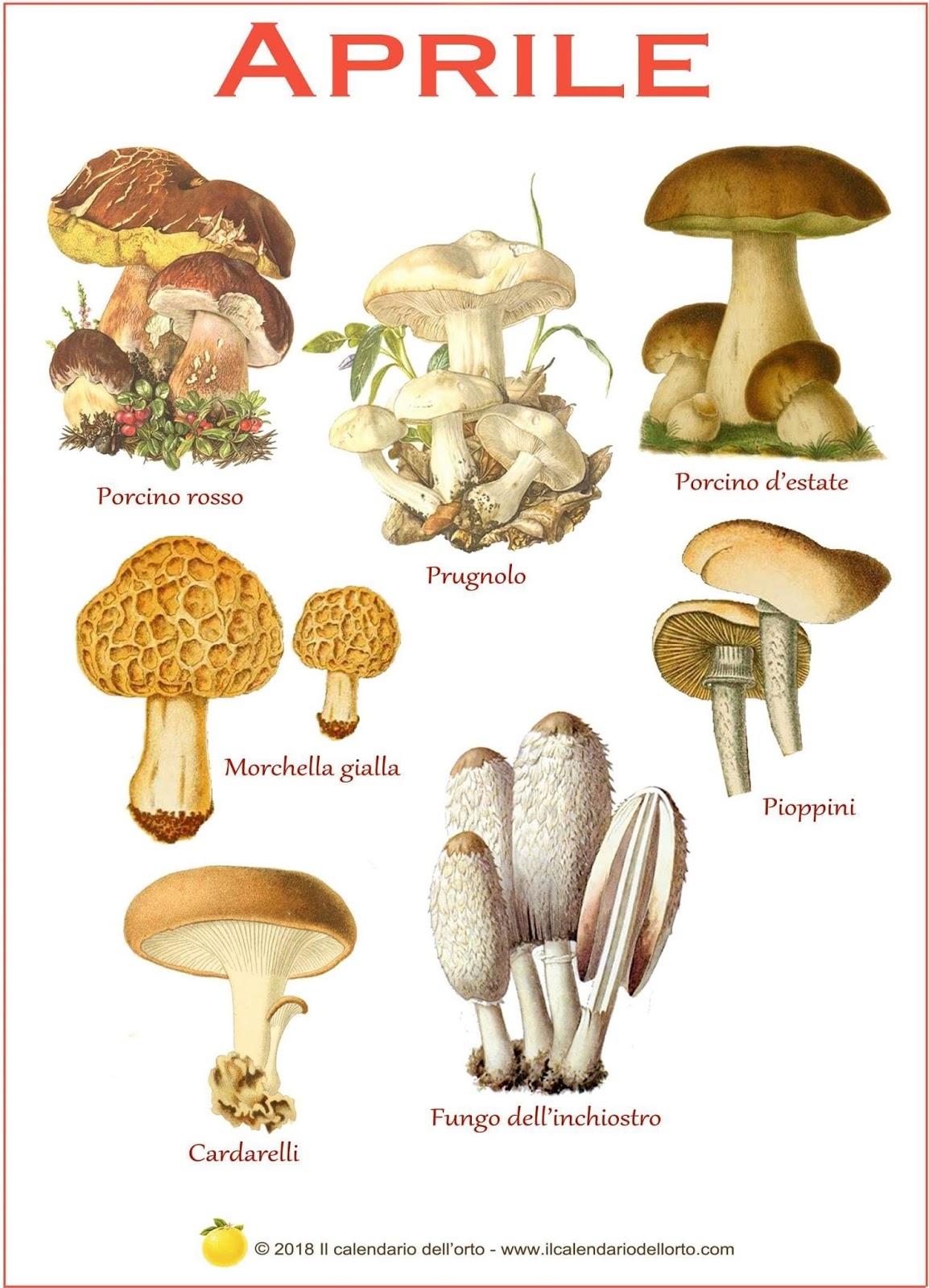 funghi che si trovano in aprile