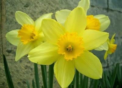 Imagen hermosa flor amarilla - fotografia