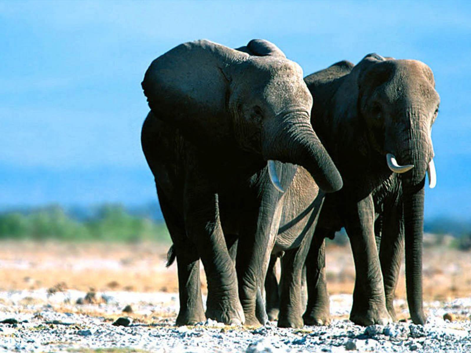 elephants wallpapers world - photo #30