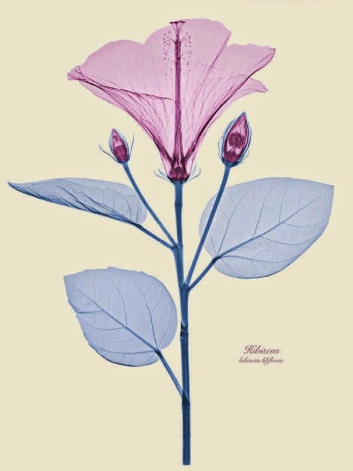 Необычные фотографии цветов от Брендана Фицпатрика