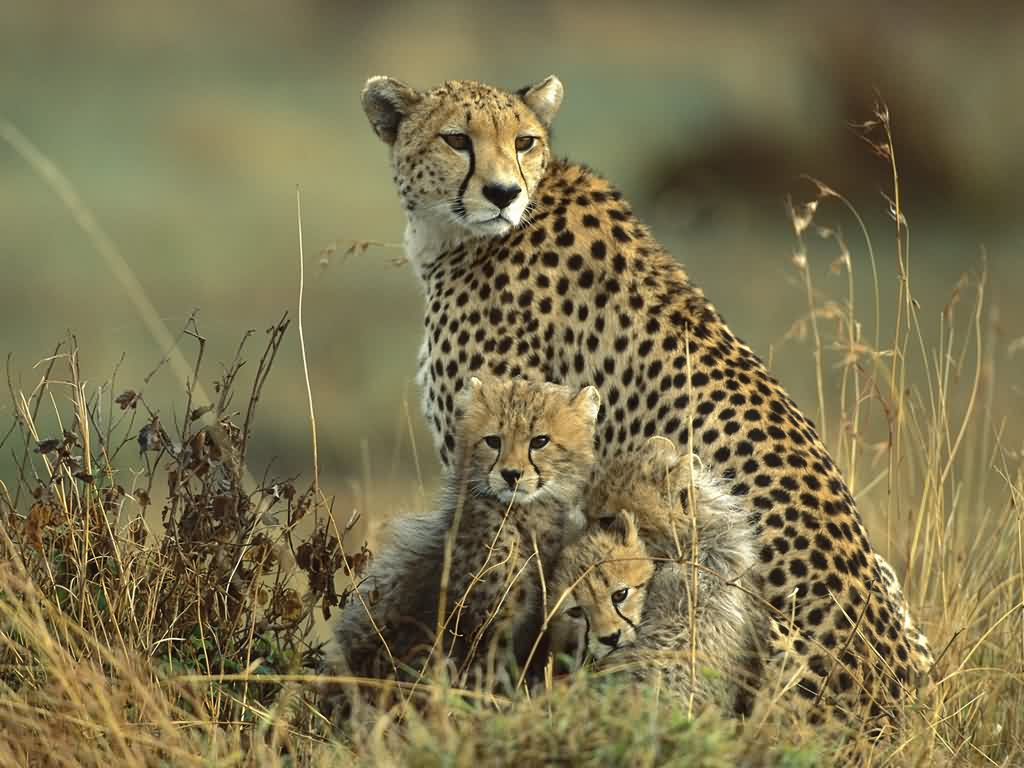Wildlife Wallpapers Hd
