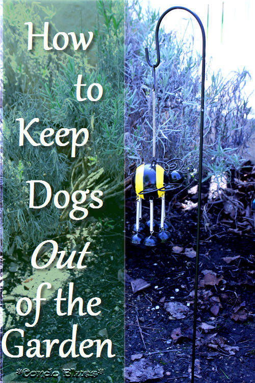 How To Keep Dogs Out Of Garden To Keep Dogs Out Of Flower ...