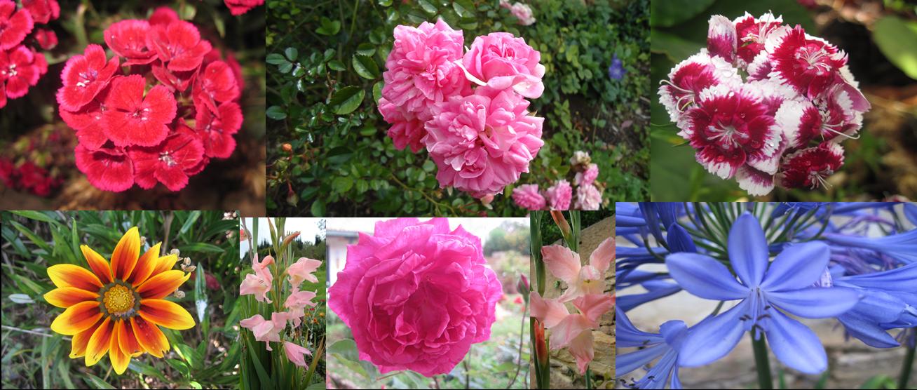 Vivero casona la colina nuestras plantas ornamentales for Plantas ornamentales para colorear