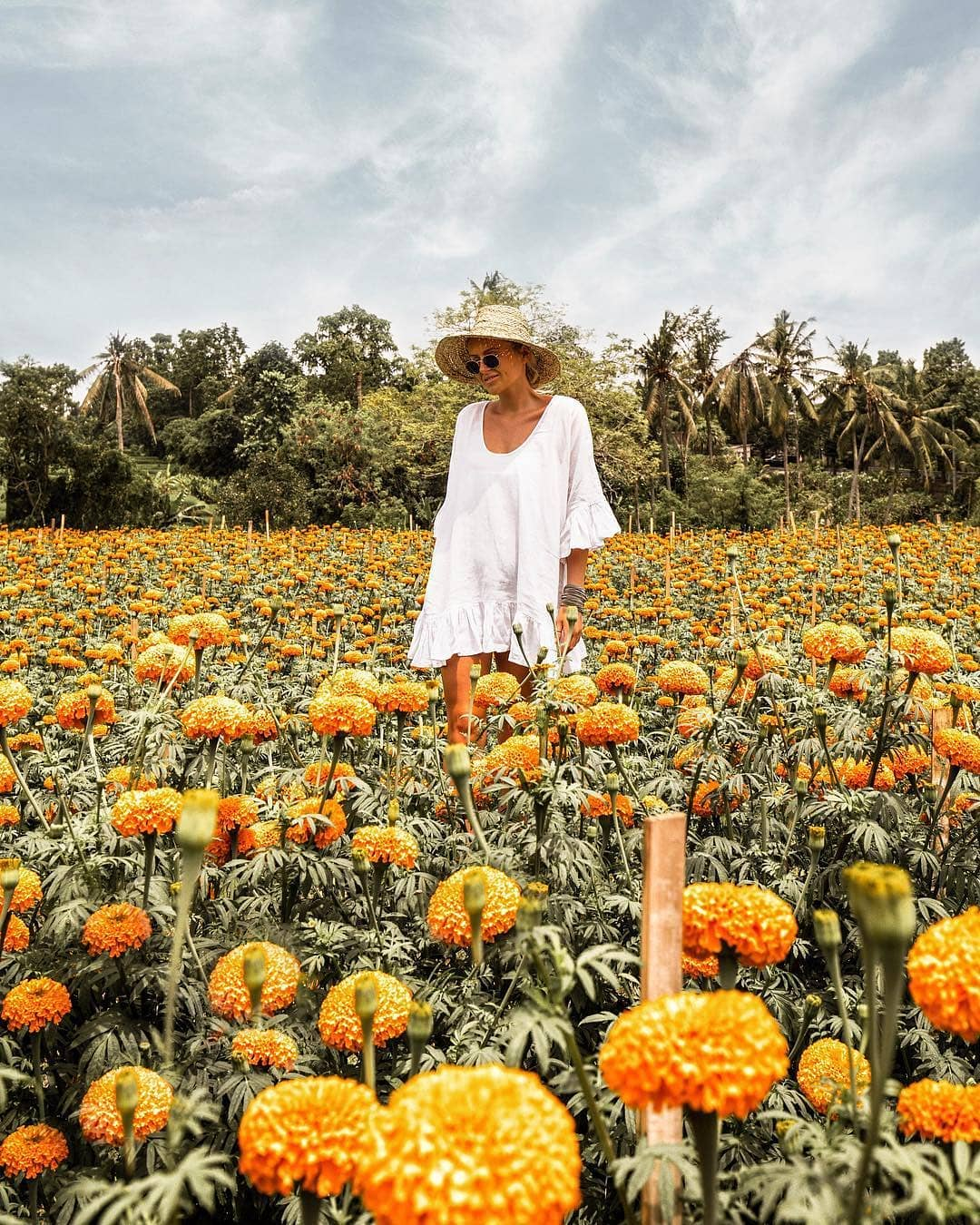 marigold-farm