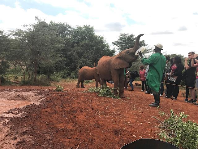 David soderick-elephant orphanage-orfanato elefantes-viaje-turismo-nairobi-kenya-africa-2018-2019-2010