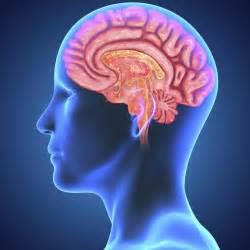 """""""our brain"""""""