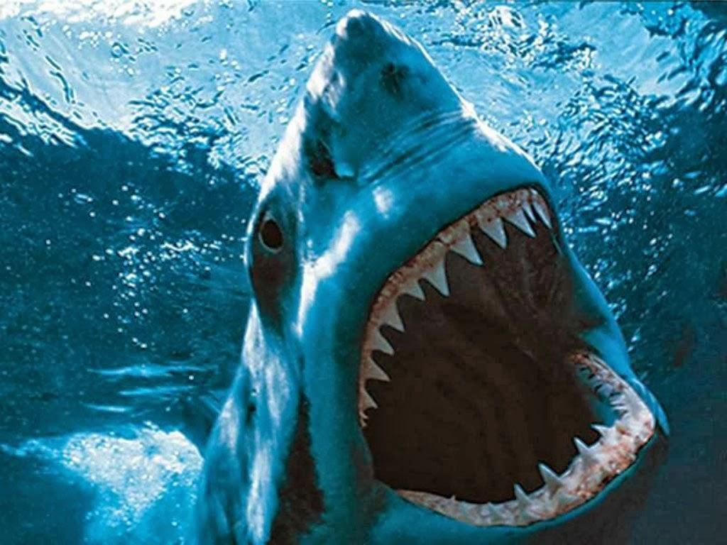 World Hd Wallpapers Shark Fish Mouth New Hd Wallpaper 2013 14