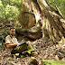 Engenheiro Florestal Brasileiro identifica a maior árvore do mundo