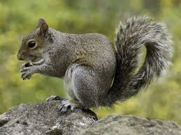 unknown squirrels facts you probably don't know
