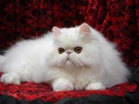 [صورة مرفقة: cats6.jpg]