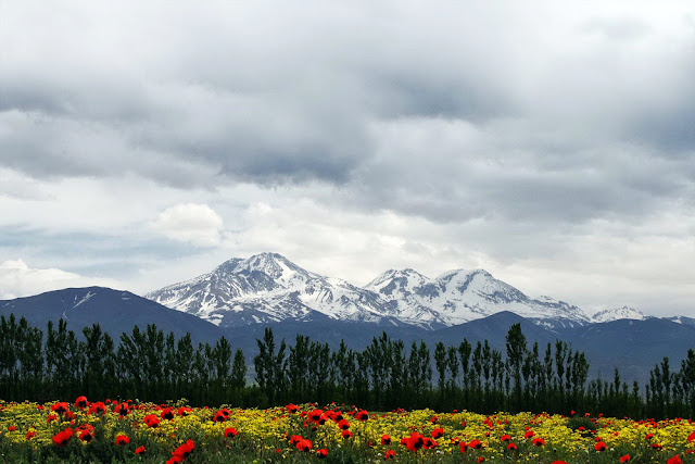Red flowers and high trees on the foothills of Sabalan Mount. Ardebil-Iran