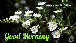 Daily greetings with Flowers.  Cool greetings free to share.