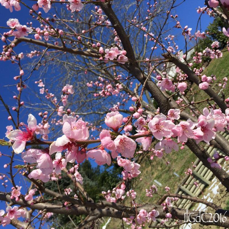 Il giardino dei ciliegi quarantaquattro gatti piante da for Piante da frutto in giardino