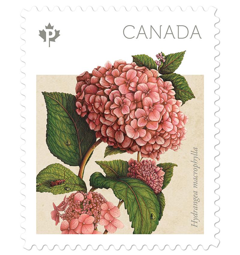 Collectorzpedia Canada 2016hydrangeas