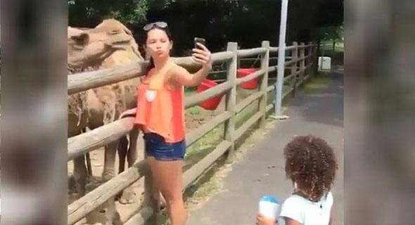 Kejadian Langka, Ajak Unta Selfie, Cewek Ini Malah Kena Caplok