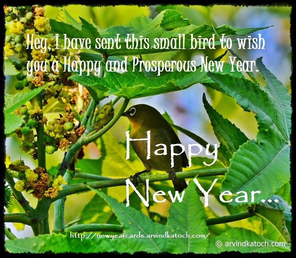 Happy New Year, Bird Card,