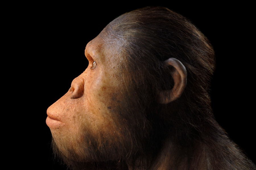 Oldest Fossil Hominin Ear Bones Ever Recovered Studied The