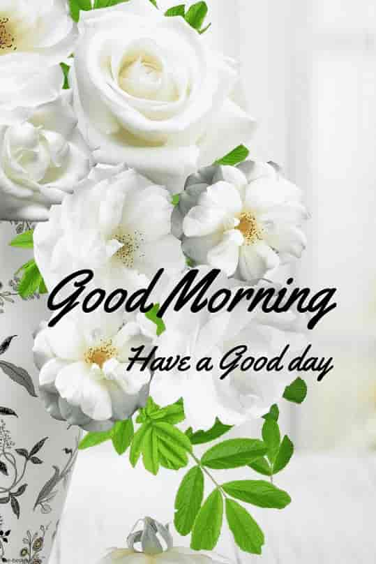 gud morning pics hd with white flowers vase