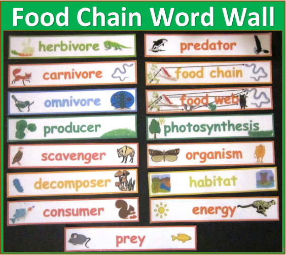 Science-word-wall-picture-cards-food-web-words