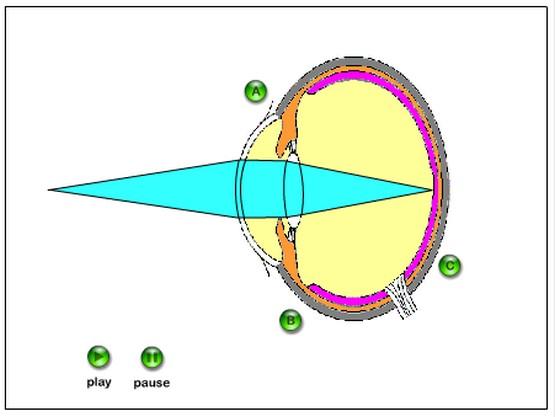 http://daskalosa.eu/physics_st/eye.swf