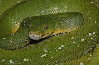 Gigitan ular