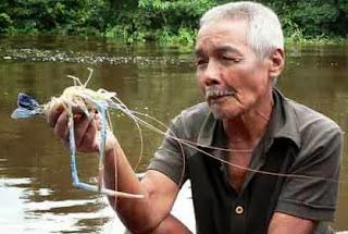 tips jitu teknik memancing,umpan mancing udang galah,air tawar,lobster air tawar,di laut,sungai,di sungai air keruh,ikan sungai kalimantan,ikan patin sungai,