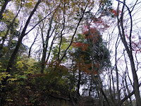 くろんど池 野鳥の森の散策道